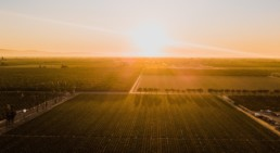 Agricultural investments continue to flourish